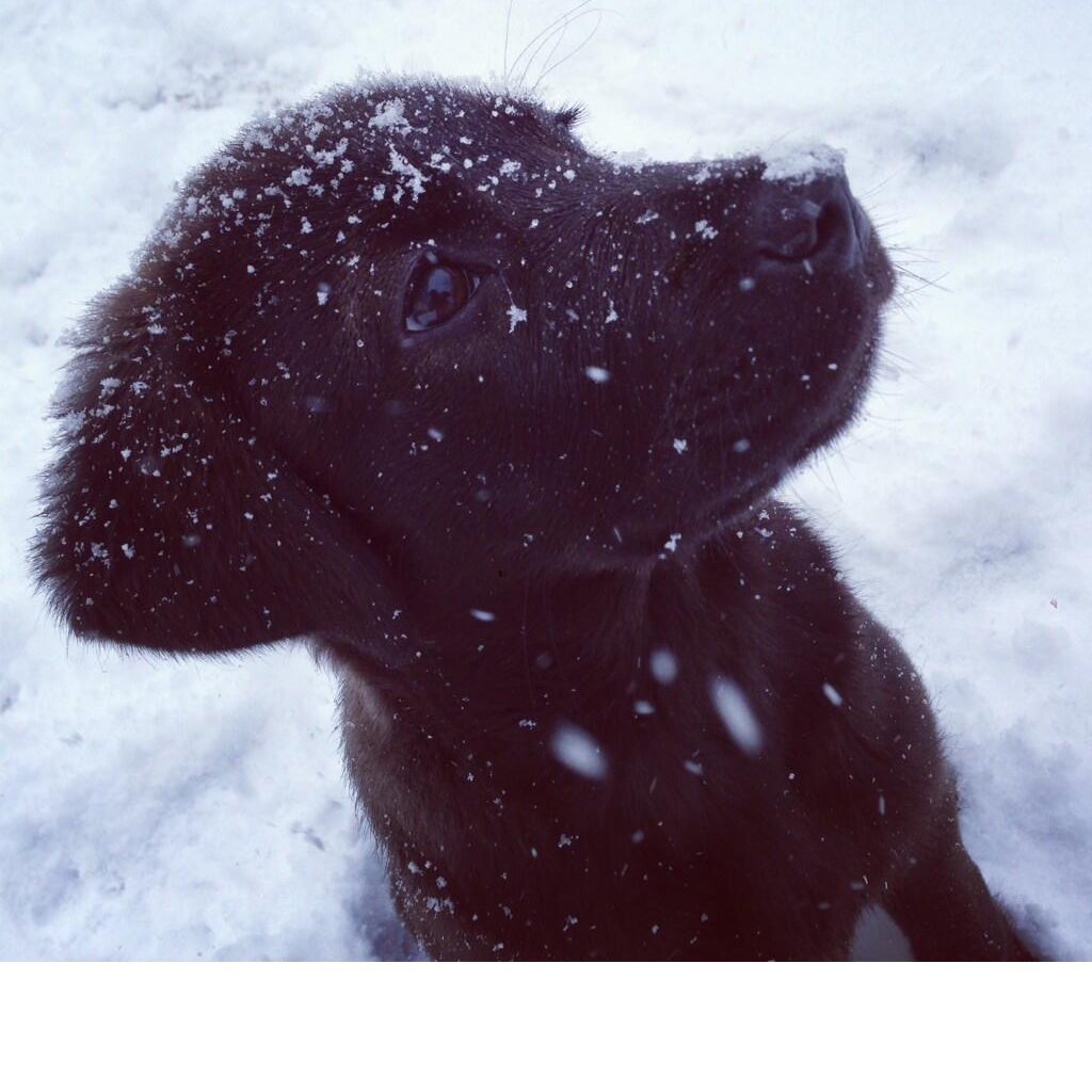 Puppy and Snow - Kelby Taylor