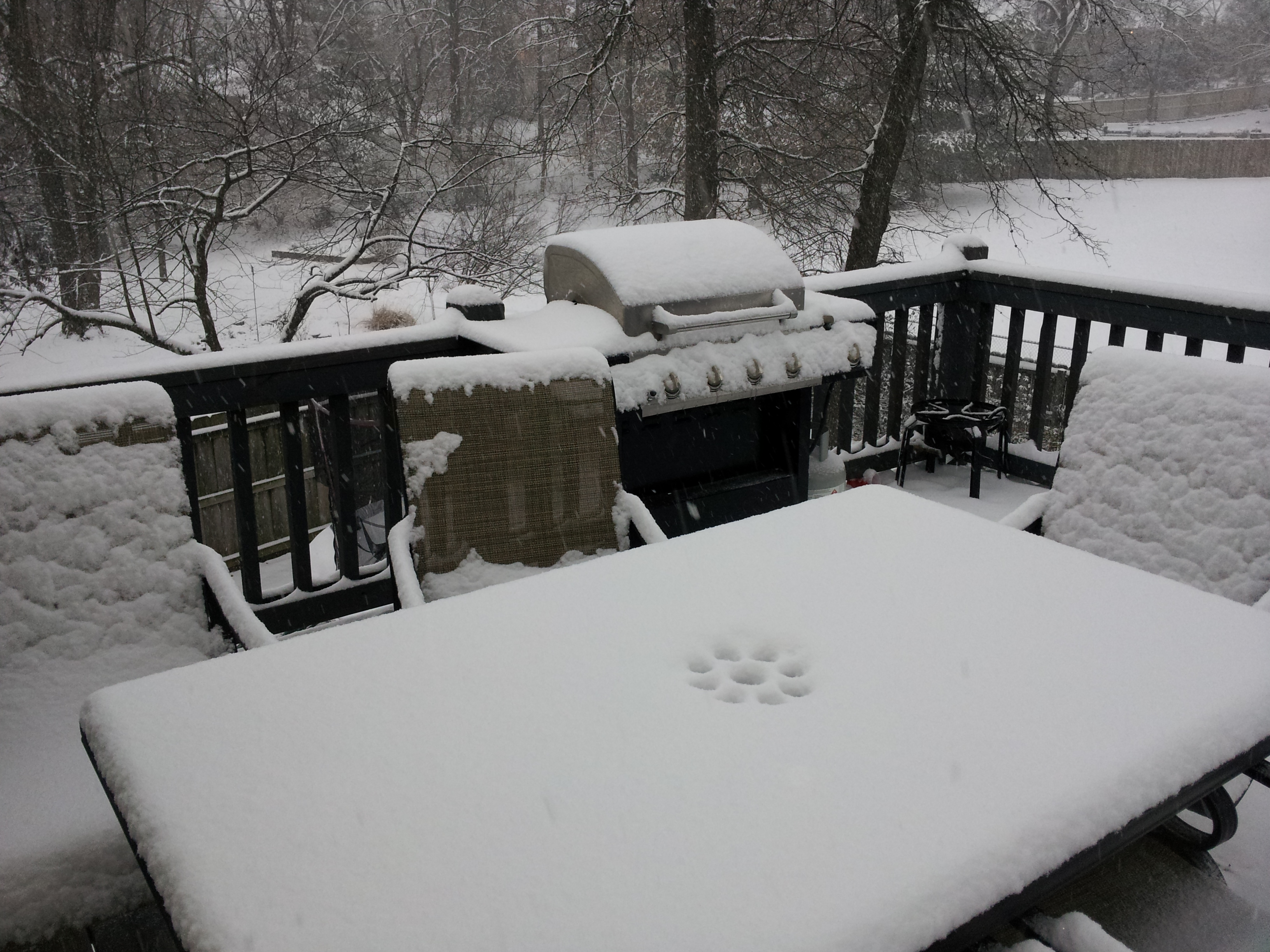 SE Springfield, My Back Deck